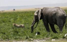 WWF: მსოფლიოში ცხოველების რაოდენობა 1970 წლიდან 60%-ით შემცირდა
