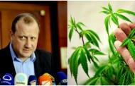 """""""გული მწყდება, ჩვენს მცენარეებს წაიღებენ პოლიციელები"""": """"გირჩის"""" ოფისში პოლიცია მარიხუანას ქოთნებს ფუთავს"""