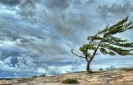 ნისლი და ქარი: როგორი ამინდია მოსალოდნელი