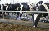 კახეთში ფერმერს 27 ძროხა მოპარეს