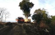 ჩაქვიდან შეკვეთილში ასწლოვანი ხის გადატანის გაპროტესტებისას ორი პირი დააკავეს