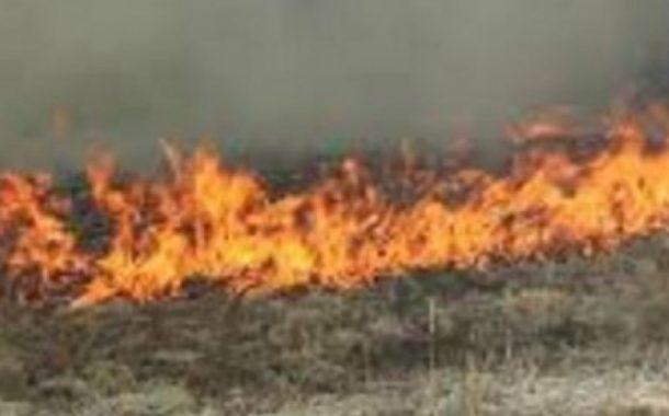 თიანეთში საძოვრებს ცეცხლი უკიდია