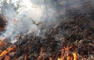 გორში ტყე იწვის: ადგილზე ხანძრის ლოკალიზება გართულებულია