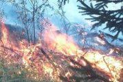 ხანძარი ჯუთასთან: ჭაუხში ცეცხლი ბალახებს უკიდია