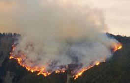 ბორჯომის ხეობაში, სოფელ დაბას მიმდებარედ ცეცხლი კვლავ გაჩნდა