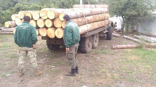 შსს-მ კახეთში ხე-ტყის უკანონოდ გადამუშავების ფაქტი გამოავლინა