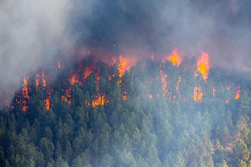 წაღვერის ტყეში ხანძრის ჩაქრობაში ვერტმფრენი ჩაერთო