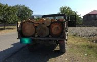 იმერეთში ხე-ტყის უკანონო ტრანსპორტირების ფაქტები დაფიქსირდა