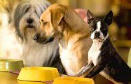 თბილისში ცხოველთა კვებისთვის განკუთვნილი აპარატები დამონტაჟდება