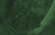შსს-მ ცოლ-ქმარი დააკავა, რომლებიც 2 შვილს მათხოვრობას აიძულებდნენ (ვიდეო)