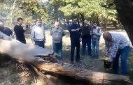 გოგი წულაიამ და კახა კუკავამ დაზიანებული ხეები მოჭრეს
